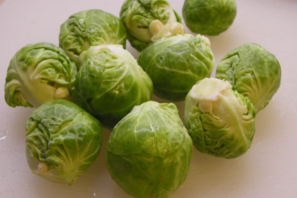 Baby Green Pandion Cabbage - Brassica Oleracea v Capita - 20 Seeds