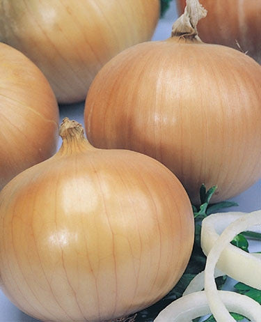 Hojem Onion - Allium Cepa - 200 Seeds