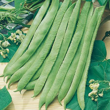 Sweet White Emergo Runner Beans - Bulk Vegetable Seeds - 100 grams