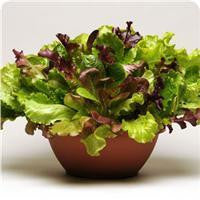 Endless Summer Salad Leaf Mix - Vegetable - 5 Seed Pellets - Simply Salad - Multi Seed Pellets - The Patio Vegetable Collection