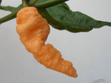 Peach Bhut Jolokia - Chilli Pepper - Capsicum Chinense - Extremely Hot - 5 Seeds