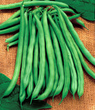 Blue Lake Bush Beans - Heirloom - Phaseolus Vulgaris - 10 Seeds