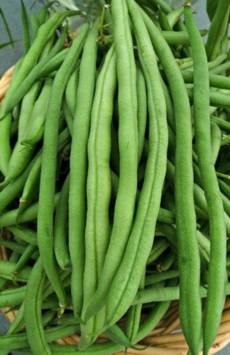 Kentucky Wonder Pole Beans - Heirloom - Phaseolus Vulgaris - 10 Seeds