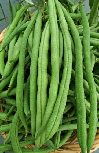 Kentucky Wonder Pole Beans - Bulk Vegetable Seeds - 200 Seeds