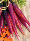 Cosmic Purple Carrot - Daucus Carrota - Heirloom Vegetable - 100 Seeds