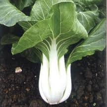 Canton Chinese Pak Choi - Pak Choy - Brassica pekinensis - Heirloom Vegetable - 200 Seeds