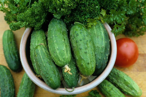 Marketmore 76 Cucumber - Bulk Vegetable Seeds - 100 grams