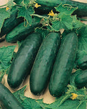 Marketmore 76 Slicing Cucumber - Cucumis Sativus - 20 Seeds