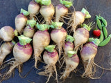 Rutabaga Laurentian - Swede - Brassica napus var. napobrassica - Heirloom Vegetable - 50 Seeds