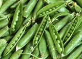 Green Arrow Heirloom Peas - Pisum Sativum - Vegetable - 10 Seeds