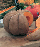 Musquee de Provence Pumpkin - French Heirloom Vegetable - 5 Seeds