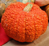 Red Warty Thing Pumpkin - Rare Vegetable - 3 Seeds
