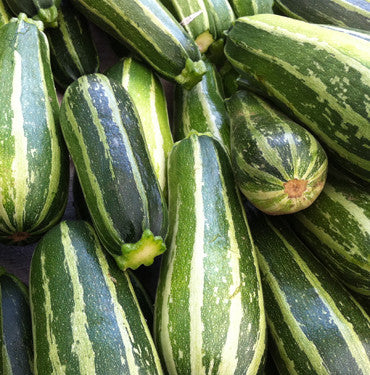 Cocozelle Squash - Italian Heirloom Squash /Zucchini Vegetable - 5 Seeds