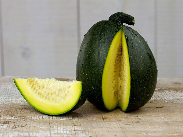 Tatume Squash - Mexican Heirloom Squash Vegetable - 10 Seeds