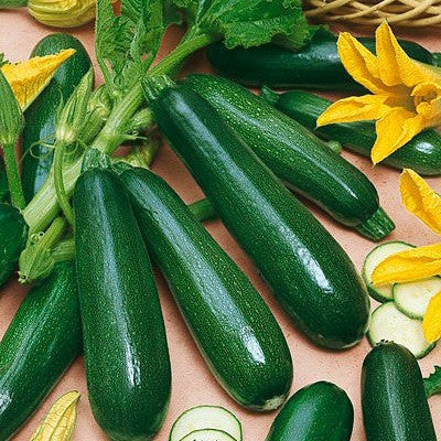 Black Beauty Zucchini Squash - Heirloom Squash / Zucchini Vegetable - 10 Seeds