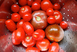 Wedding Favour Seeds - Mixed Tomato Seeds