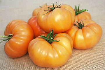 Kelogg's Breakfast Tomato - Solanum lycopersicon - Heirloom Vegetable - 10 Seeds