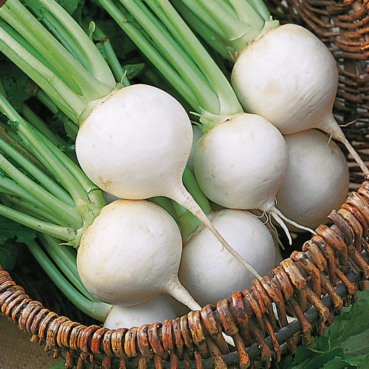 White Egg Turnip - Brassica napa napa - Heirloom Vegetable - 400 Seeds