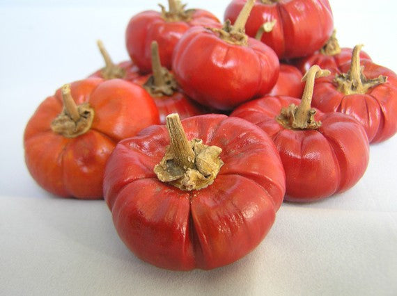 Pumpkin Chilli Pepper - Capsicum baccatum - 5 Seeds