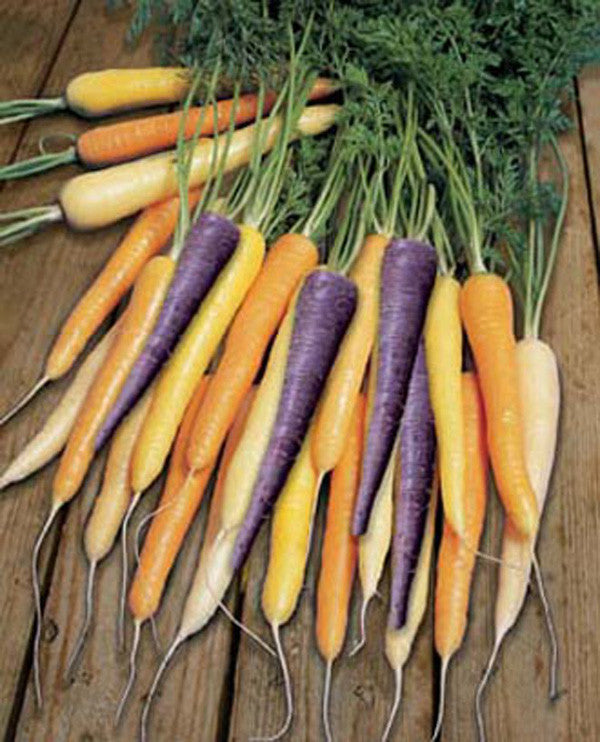 Multicoloured Harlequin Carrot Mix - Vegetable - Daucus Carrota - 50 Seeds