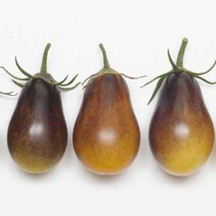 Indigo Pear Drops Cocktail Tomato - Bulk Vegetable Seeds - 100 seeds