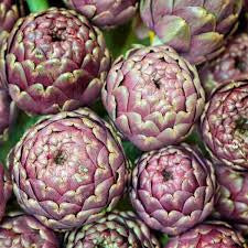 Violet de Provence Artichoke - Bulk Vegetable Seeds - 20 grams