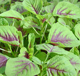 Red Marog - Marogo - African Vegetable - Amaranth - 100 Seeds