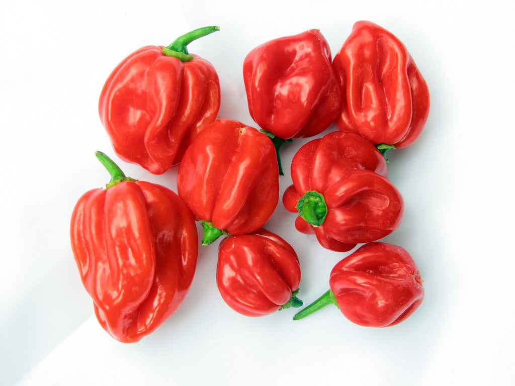 Jamaican Red Scotch Bonnet - Capsicum Chinense - Chilli Pepper - 10 Seeds