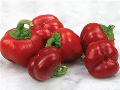 Mini Red Sweet Bell Pepper - Capsicum Annuum - Heirloom Vegetable - 5 Seeds