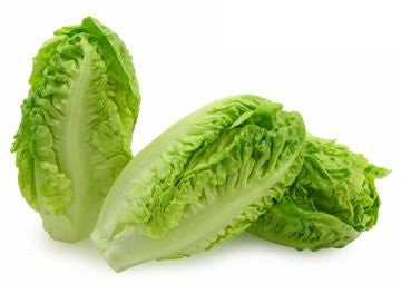 Little Gem Butterhead Lettuce - Bulk Vegetable Seeds - 20 grams