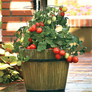 Little Napoli Hybrid Roma Type Cocktail Tomato - Container Hanging Basket Trailing Tomato - Lycopersicon Esculentum - 5 Seeds