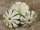 Jaune et Verte Scalloped Squash Patty Pan - Cucurbita Pepo - Heirloom Vegetable - 10 Seeds