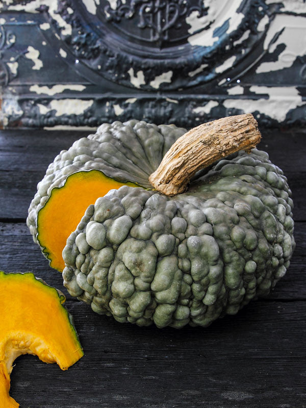 Marina de Chioggia squash - Cucurbita maxima - Heirloom Vegetable - 5 Seeds