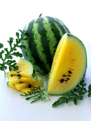 Yellow Petite Watermelon - Citrullus lanatus - Heirloom Vegetable / Fruit - 10 Seeds