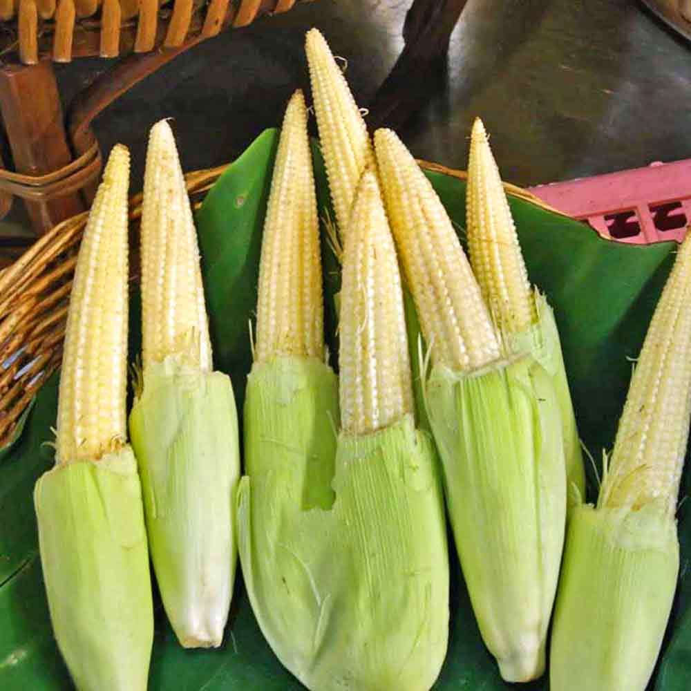 Baby Corn - Chires - Heirloom Vegetable - 10 Seeds