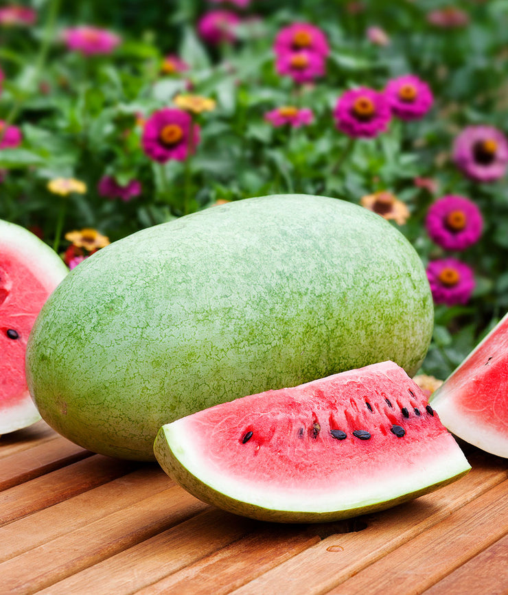 Charleston Grey Watermelon - Bulk Vegetable Seeds - 50 grams