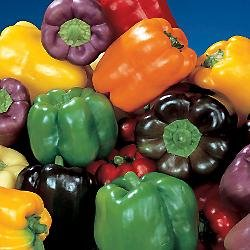 Rainbow Sweet Bell Pepper Mix - Capsicum Annuum - Heirloom Vegetable - 20 Seeds