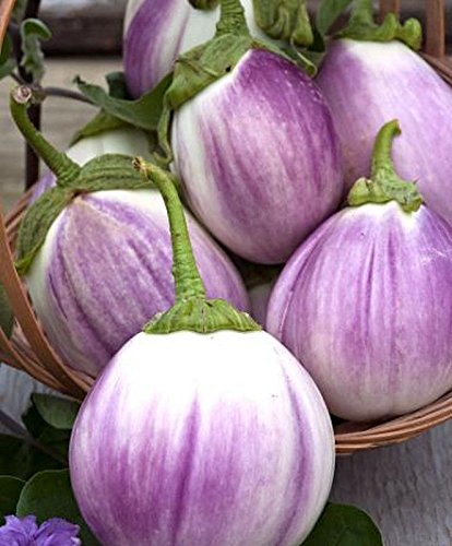 Rotonda Bianca Sfumata Eggplant - ORGANIC - Heirloom Vegetable - 20 Seeds