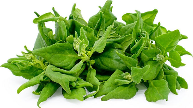 New Zealand Spinach / Malabar Spinach - Tetragonia tetragonioides- Vegetable - 50 Seeds