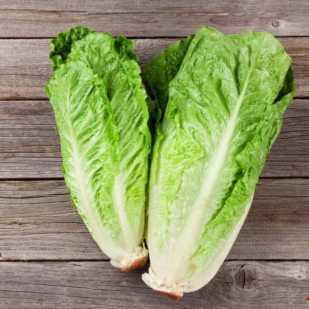 Lettuce Paris White  - Bulk Vegetable Seeds - 20 grams