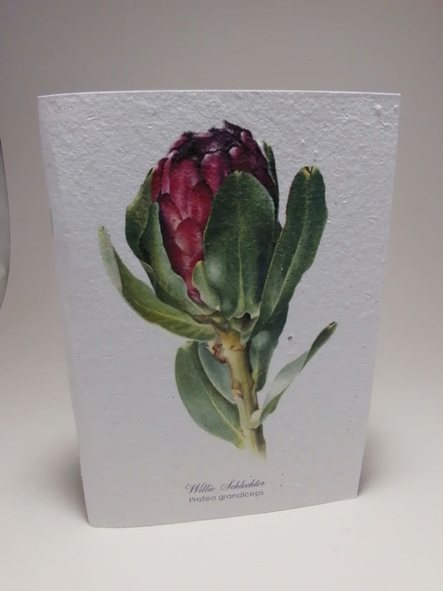 Growing Paper - Note Book - Red Protea