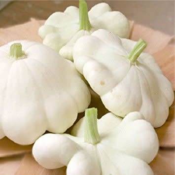 Patty Pan Alba  - Heirloom Vegetable - Cucurbita pepo - 10 Seeds