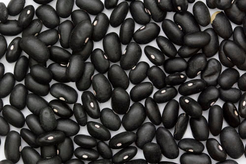 Black Delgado Mexican Climbing Beans - Heirloom Vegetable - Phaseolus vulgaris - 10 Seeds