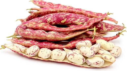 Cranberry Bush Beans - Heirloom Vegetable - Phaseolus vulgaris - 10 Seeds