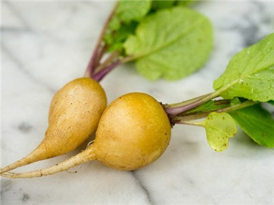 Golden Helios Radish  - Heirloom Vegetable - Raphanus sativus - 50 Seeds