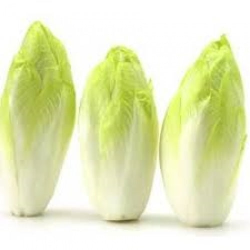 Witloof Belgian Endive / Chicory - Heirloom Vegetable - Chicorium intybus - 100 Seeds