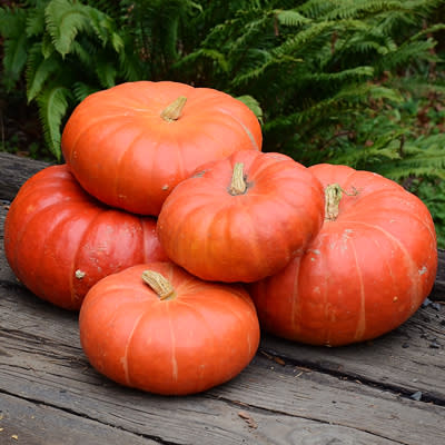 Cinderella Pumpkin  - Heirloom Vegetable - Cucurbita maxima - 5 Seeds