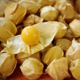 Pineapple Tomatillo  - Heirloom Vegetable / Fruit - Physalis philadelphica - 50 Seeds