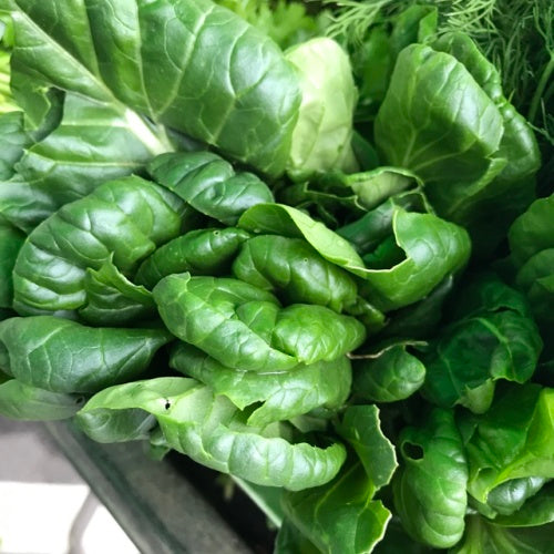 Black Knight Tatsoi Mustard Greens - Heirloom Vegetable - Brassica narinosa - 100 Seeds