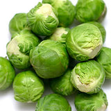 Catskill Brussel Sprouts - Heirloom Vegetable - Brassica oleracea var. gemmifera - 100 Seeds